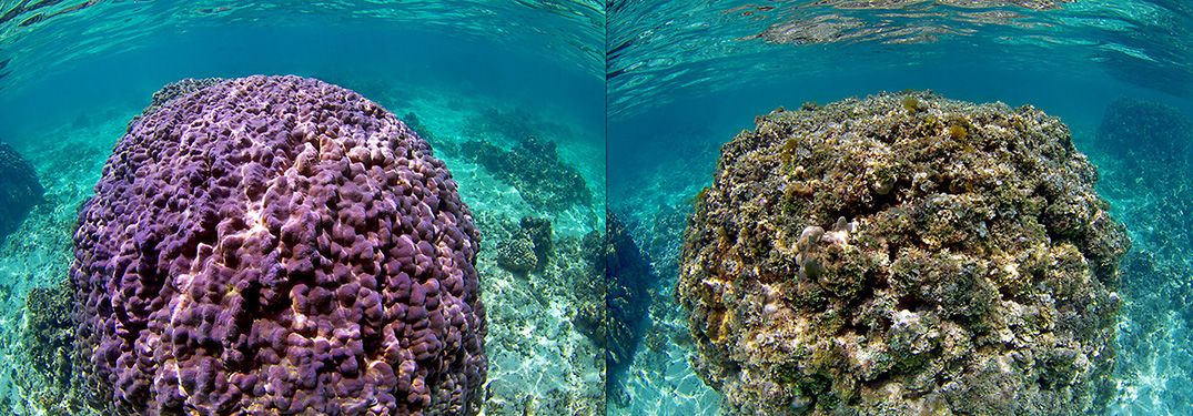 Comparison of healthy and degraded coral