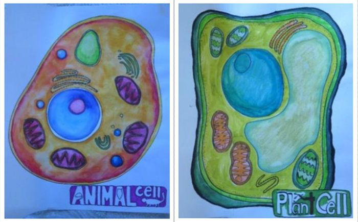 Image: Students in the arts-integrated life science class drew animal and plant cells to understand the structures within.