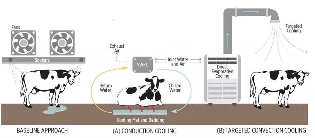 cow-cooling-infographic-1075x470-compressor.jpg