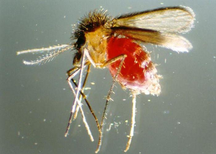 preparate parazite inofensive papilomele provoacă educație