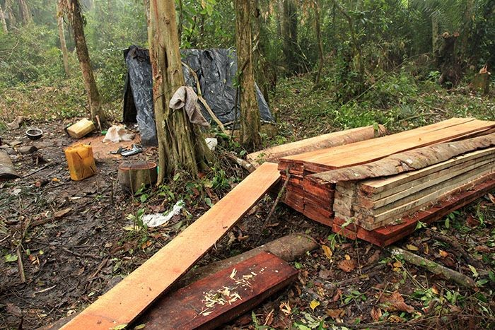 deforestation and uganda When mary aloyo crossed into uganda from south sudan, she was bussed  within hours to the nearest refugee settlement 24 hours later, she.