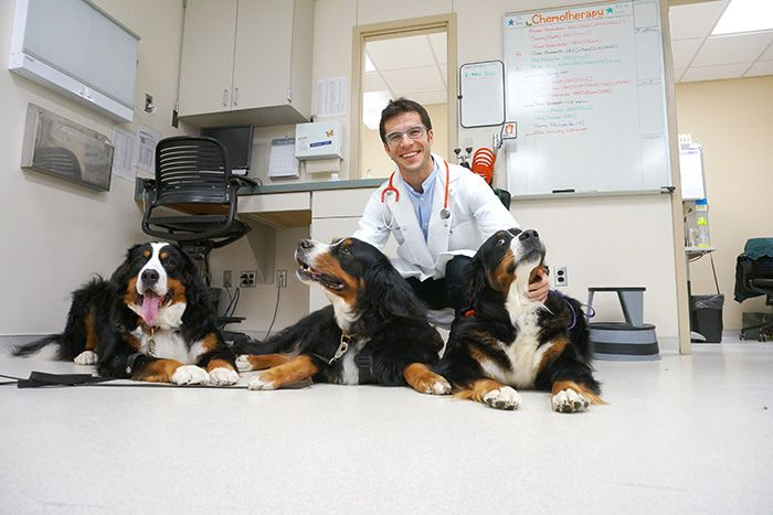 Dr. Paulo Vilar, head of oncology at MSU's College of Veterinary