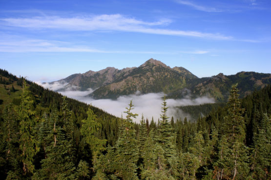 Fog rises above a mountain in Olympic National Park